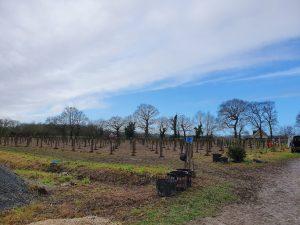 1000 arbres plantés avec l'éco-aventurier Julien Moreau !